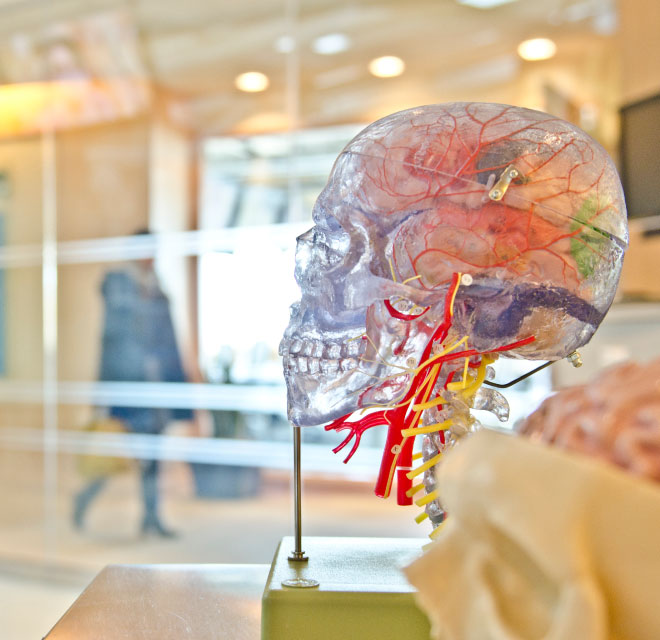 Plastic model of the nervous system, Neurology in Montana